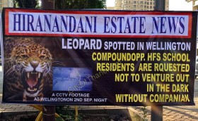 Leopard at Wellington Thane