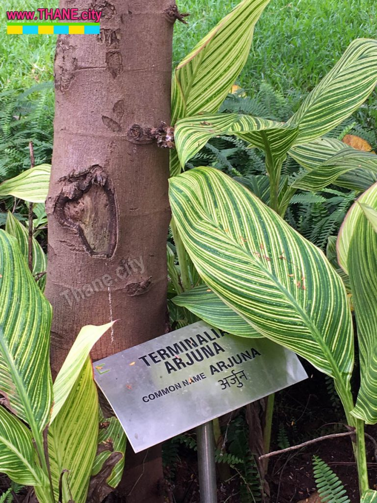 Thane Community Park Tree Names